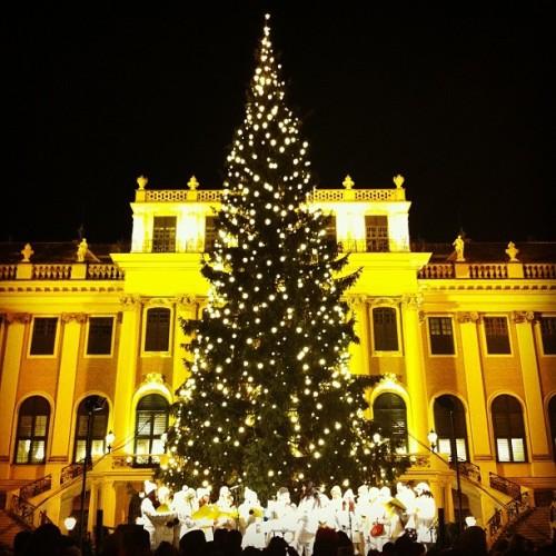 christmas tree schonbrunn
